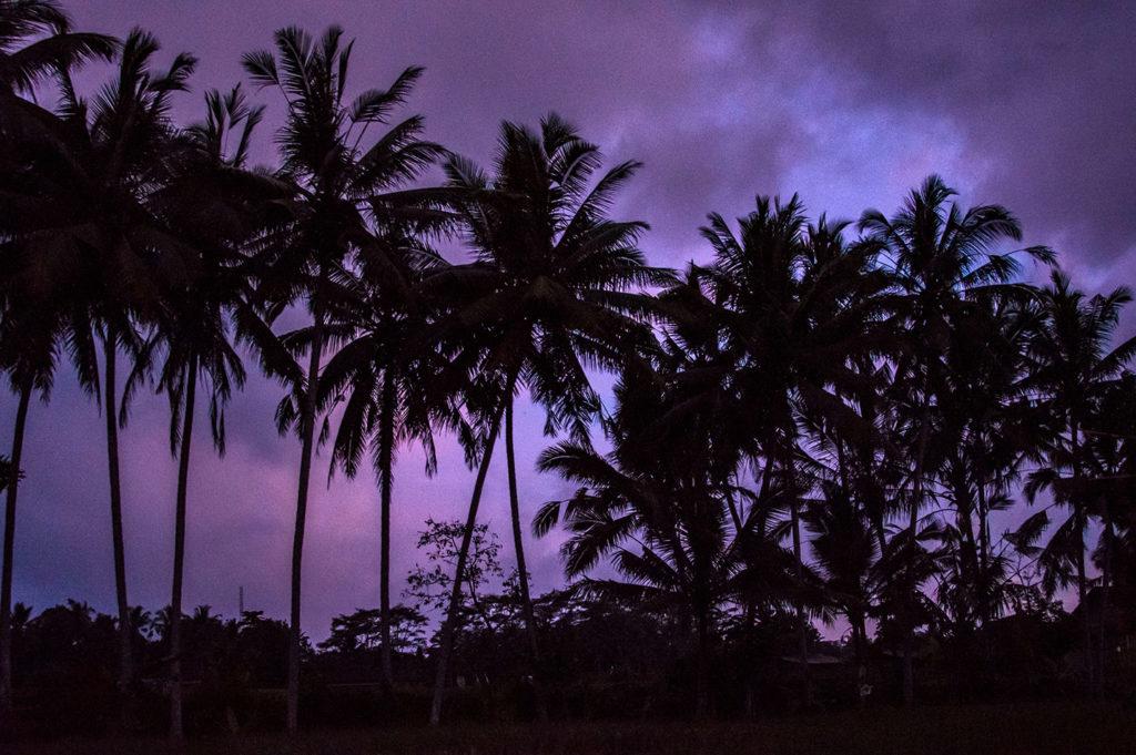 Purple amazing sunset sky palm