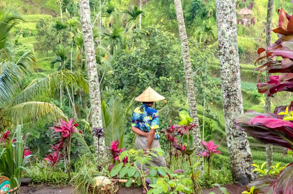 Rice field farmer landscaper