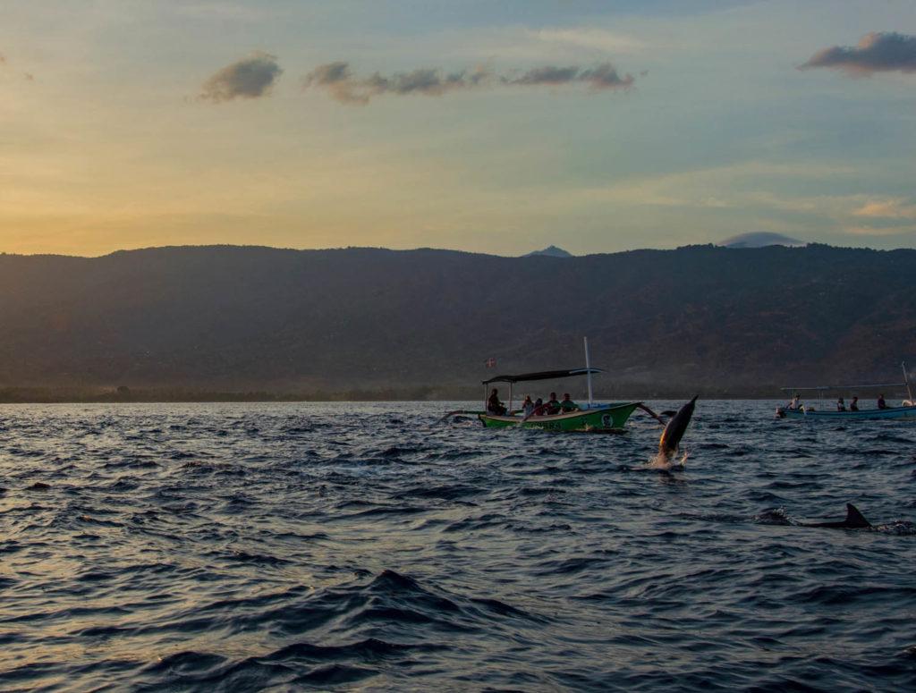Zoom dolphin lovina at Sunrise bali Indonesia