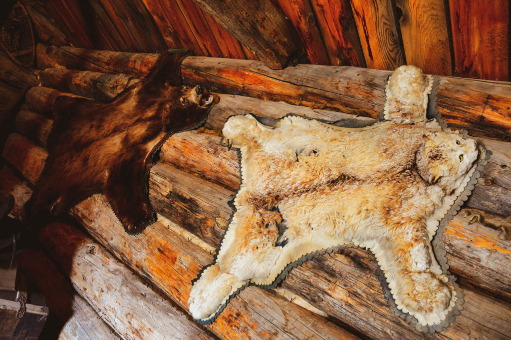 decorative bear usa house
