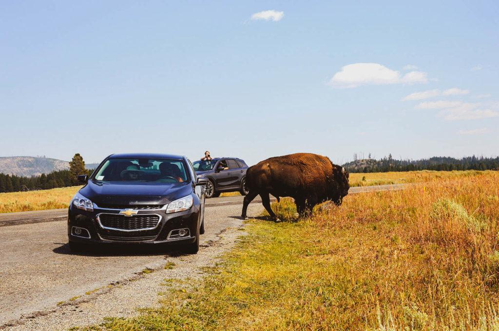 buffalo cars